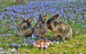 rabbit-3259861_1920